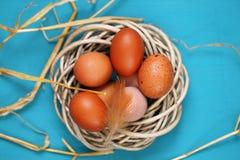 Ägg på en blått Fotografering för Bildbyråer