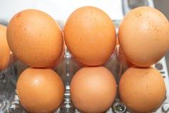 Ägg på en plast- ask Arkivbild