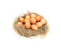 Ägg på en vitbakgrund Royaltyfri Foto