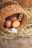 Ägg på gammalt trä Arkivbild