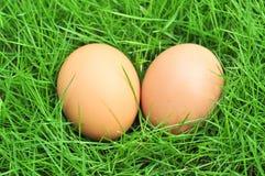 Ägg på grönt gräs fotografering för bildbyråer