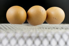 Ägg på stålkorg Arkivbilder
