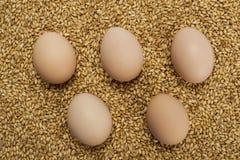 Ägg på vetekorn Arkivbild