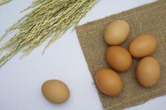 Ägg på vitbakgrund Fotografering för Bildbyråer