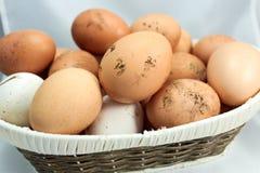 Ägg som är naturliga Royaltyfri Foto