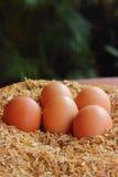 Ägg som läggas på husken Arkivfoton