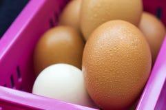 Ägg som stängs upp Fotografering för Bildbyråer