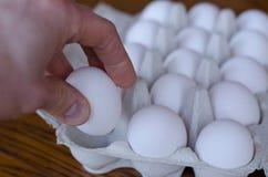 Ägg som väljs av handen arkivfoto