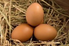 Ägg sugrör På trä Arkivfoton