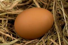 Ägg sugrör På trä Royaltyfria Foton