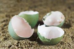 ägg tömmer Fotografering för Bildbyråer