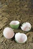 ägg tömmer Arkivfoton