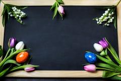 Ägg undersöker för easter Royaltyfria Bilder