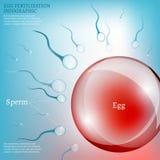 Äggbefruktning stock illustrationer
