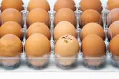Äggbehållare med ett av brutna ägg royaltyfri foto