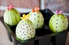 Äggjakt Traditionell matmatlagning målade ägg DIY och handgjort Lycklig påskferie Naturlig färg gjord easter äggbild grön livstid arkivfoto