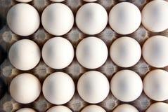 äggmagasin arkivbilder