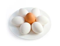äggplatta Arkivfoto