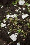 Äggskal som fyller på kalcier i jorden Arkivfoton