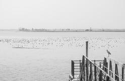 Ägretthäger på räcket och flock av utvandrande änder för våtmarkfåglar i en sjö arkivbild