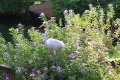 Ägretthägret i blommor Royaltyfri Bild