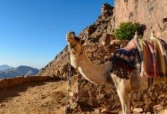 Ägypten, Sinai, Berg Moses Straße, auf der Pilger den Berg von Mosese und von einzelnem Kamel auf der Straße klettern Lizenzfreies Stockbild