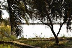 Ägypten, Siwa-Oase, Seeseite, Sun stellte, Bäume ein stockbild