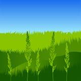 Ährchen auf dem Hintergrund des Grases Stockfoto