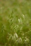 Ährchen im Gras Stockfoto