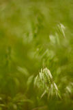 Ährchen im Gras Stockfotos
