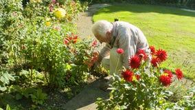 Äldre arbeta i trädgården för man