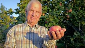 Äldre bondeagronom Holding A mogna Apple i trädgården i ljus av solnedgången arkivfilmer