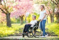 Äldre farmor i rullstol med sondottern i vårnatur royaltyfria foton