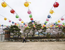 Äldre koreansk man som går under färgrika pappers- lyktor Royaltyfri Fotografi