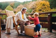 Äldre kvinna med ett litet barnbarnbarnsbarn på en terrass i höst arkivfoto