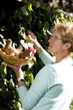 Äldre kvinna som döljer easter ägg royaltyfri fotografi