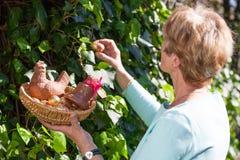 Äldre kvinna som döljer easter ägg fotografering för bildbyråer