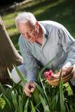 Äldre man som döljer easter ägg arkivfoton