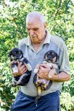 Äldre puppys för en manuppehälle två på hans händer Manifestation av loen royaltyfria bilder