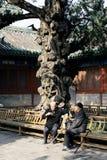 Äldre vänner som dricker te i Peking, Kina Arkivbilder