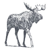 älg royaltyfri illustrationer