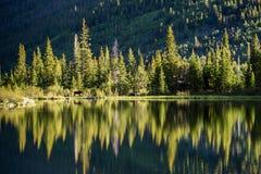 Älg på den borttappade sjön - Colorado Royaltyfri Fotografi