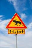 Älg på ett vägmärke Arkivfoto