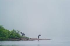 Älgar vid floden Royaltyfri Fotografi
