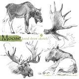 Älgen skissar wild djur illustration royaltyfri illustrationer