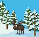 Älgen står i snöfält royaltyfri illustrationer