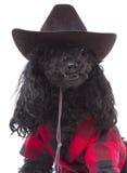 älska natur för hund Arkivbilder