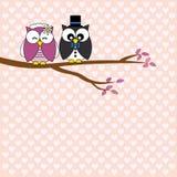 älska owls Arkivbilder