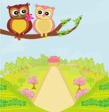 älska owls Fotografering för Bildbyråer