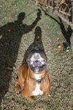 älsklings- djur, hundkapplöpning Arkivbild